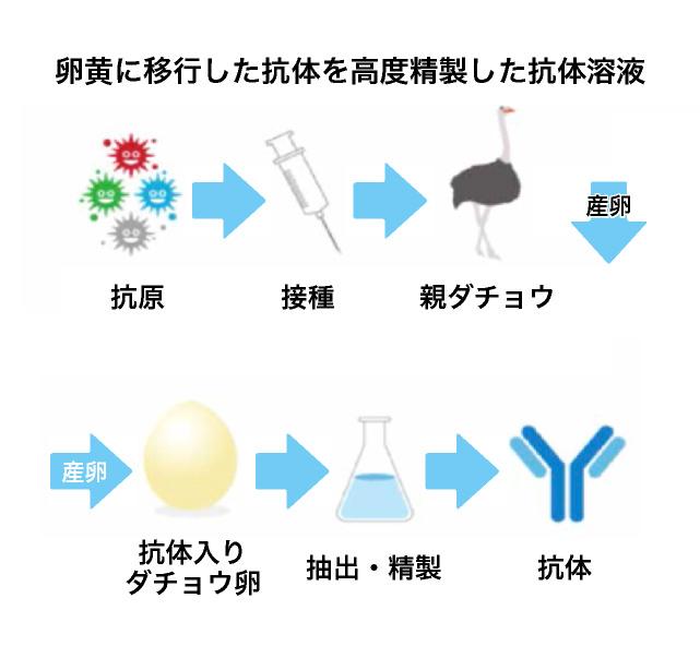 スプレー ダチョウ 抗体